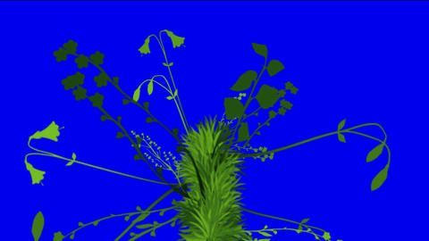 flower & plant growing background Stock Video Footage