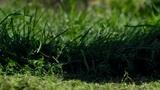 Lawn mower cutting grass Footage