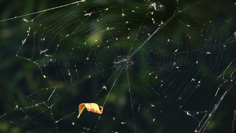 Cobweb against dark green background Stock Video Footage