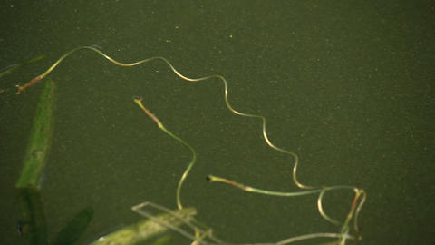 Pond-skaters playing on water surface Stock Video Footage