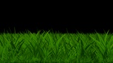 grass Animation