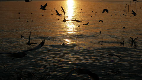 Flying birds against reflection water sea at sunset Footage