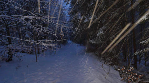 Night winter forest. Snowy trees in dark winter park. Night walking trail Live Action