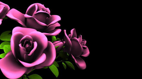Pink Roses Bouquet On Black Text Space Animation