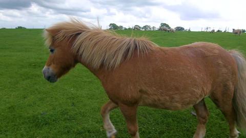Side shot of pony trotting in a green field Footage
