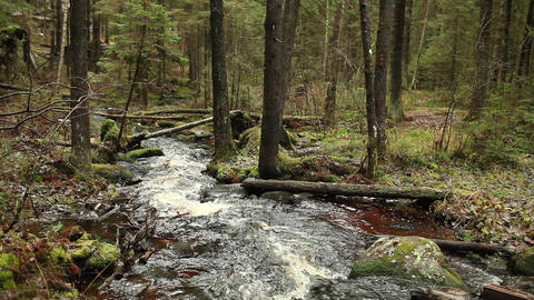 Forest stream flowing down Footage