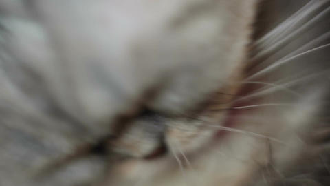 Funny cat washes after a shower, macro Footage