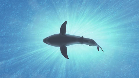 4K Great White Shark in the Ocean Low Angle 1 Animation