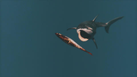 The Great White Shark Attack 1 Animation