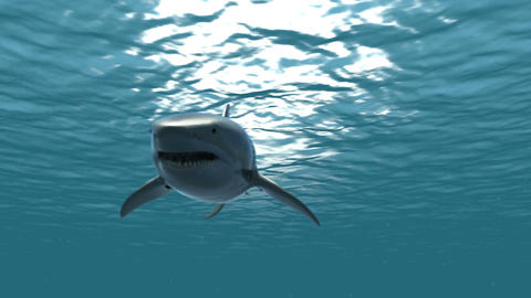 The Great White Shark in the Ocean 2 Animation