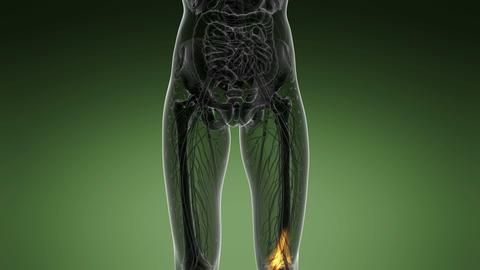 knee medical scan footage Footage