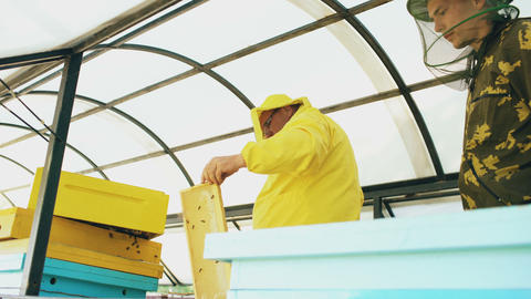 Two beekeepers checking frames and harvesting honey while working in apiary on Footage