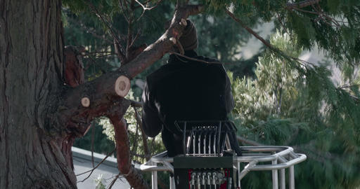 Woodcutter Branch Cut Thuja Footage