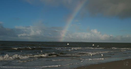 Birds with Rainbow on North Frisian Island Beach of Amrum in Germany Footage