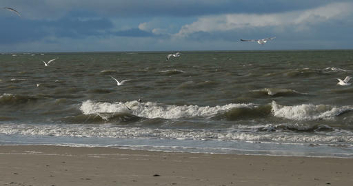 Birds on North Frisian Island Beach of Amrum in Germany Bild