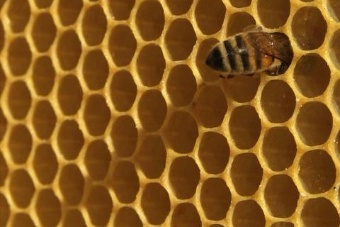 closeup of bees on honeycomb in apiary フォト