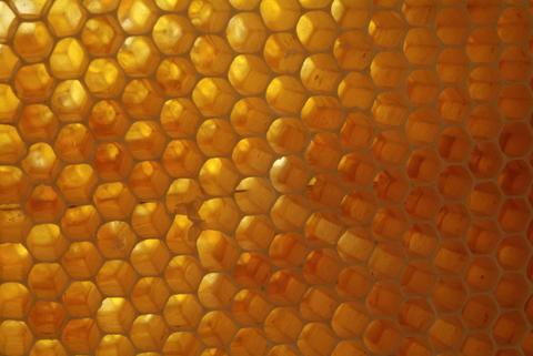 closeup of bees on honeycomb in apiary Foto