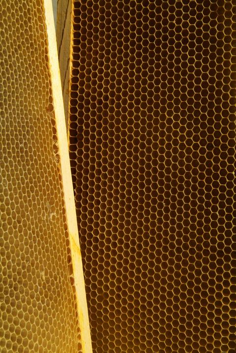 closeup of bees on honeycomb in apiary Photo