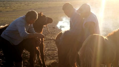 Branding Young Horses Footage