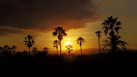 Aerial Of Palm Trees And The Sunset Footage