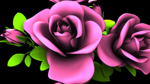 Pink Roses Bouquet On Black Background CG動画