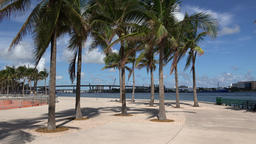 USA Florida Miami Downtown Bayfront Park Path roundabout with palm trees ビデオ