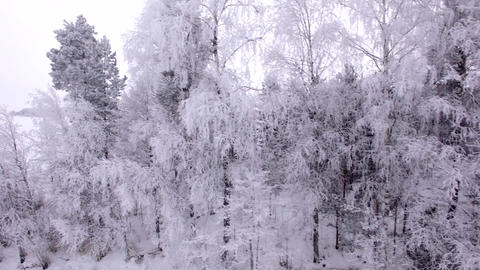 Frozen lake behind frosty trees, aerial shot Footage