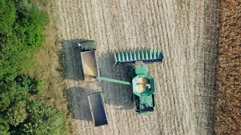 Harvesting of corn. Harvester gather corn from the field. Russia, From Dron, Image