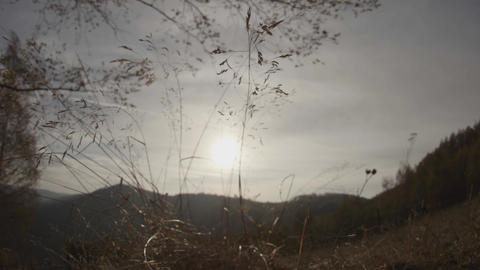 Sun at sunset that is seen among high grasses that move in the wind 29 Footage