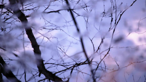 Melancholic leafless trees reflecting from rippling water surface Footage