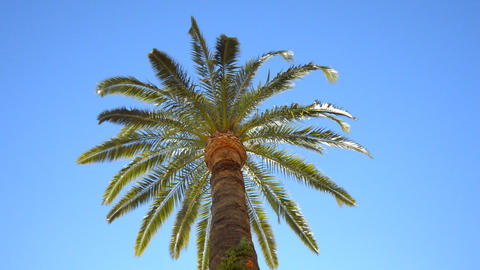 Palm Trees And Cloudless Sky Image
