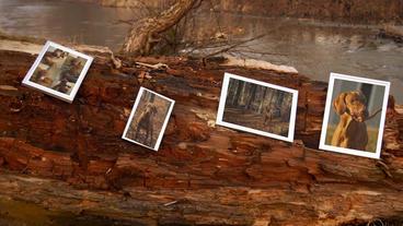 Riverside Autumn Slow Motion Photo Studio&placeholders Plantilla de After Effects
