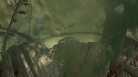Beautiful wedding rings in the forest on a stump of cut timber Footage