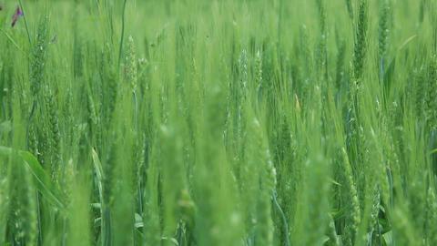 Wind in Grass Footage