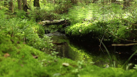 green rainforest stream sunlit ビデオ