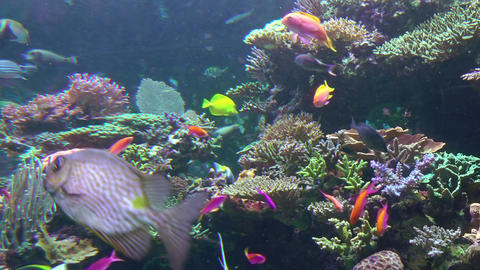 Colored Corals and a lot of Fishes Image