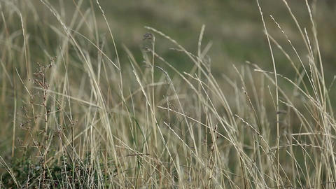 The steppe of Ukraine, the dry grass rocks on the wind Footage