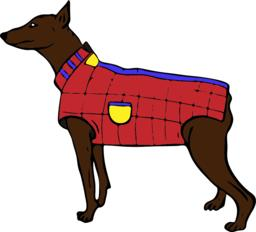 brown doberman dog in a red jacket Vector