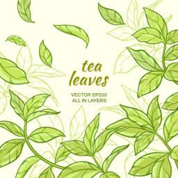 tea_leaves06_2 Vector