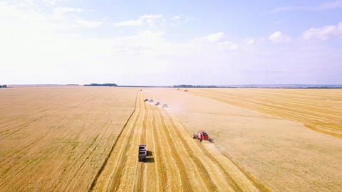 Combine harvester harvest wheat on the field, From Dron Live Action