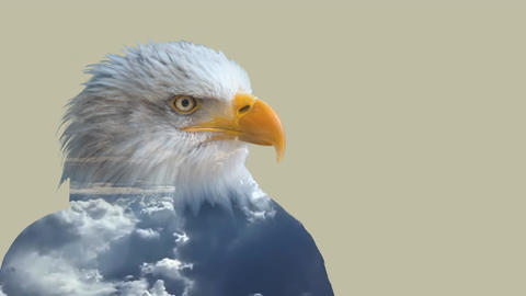 Double exposure of eagle Animation
