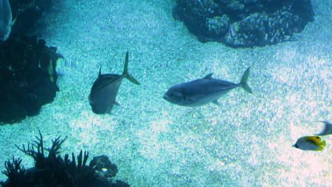 Footage of fishes swimming in big public aquarium Footage