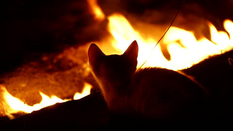 Fire Cat. Cat-firefighter Archivo