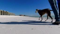 Walking a dog on a sunny white sand beach 1 slomo 画像