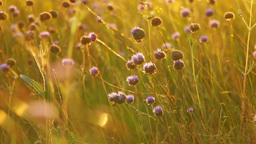 Wildflowers, Sunrays and the Wind Footage