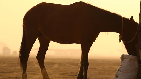 Brown Horse in the desert Footage