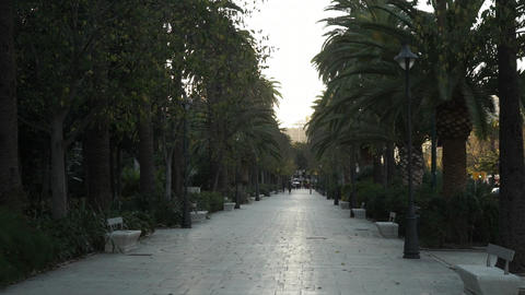 Nice alley or parkway with palm trees in Malaga Live Action