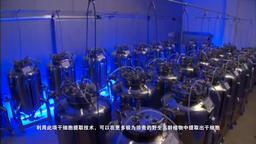 Ginseng stem cell propaganda film Image