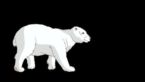 Polar Bear 2 Walks Alpha CG動画素材