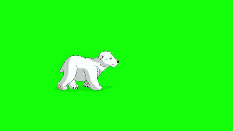Little Polar Teddy Bear 2 Walks Chroma Animation